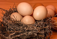 Huevos de pastoreo